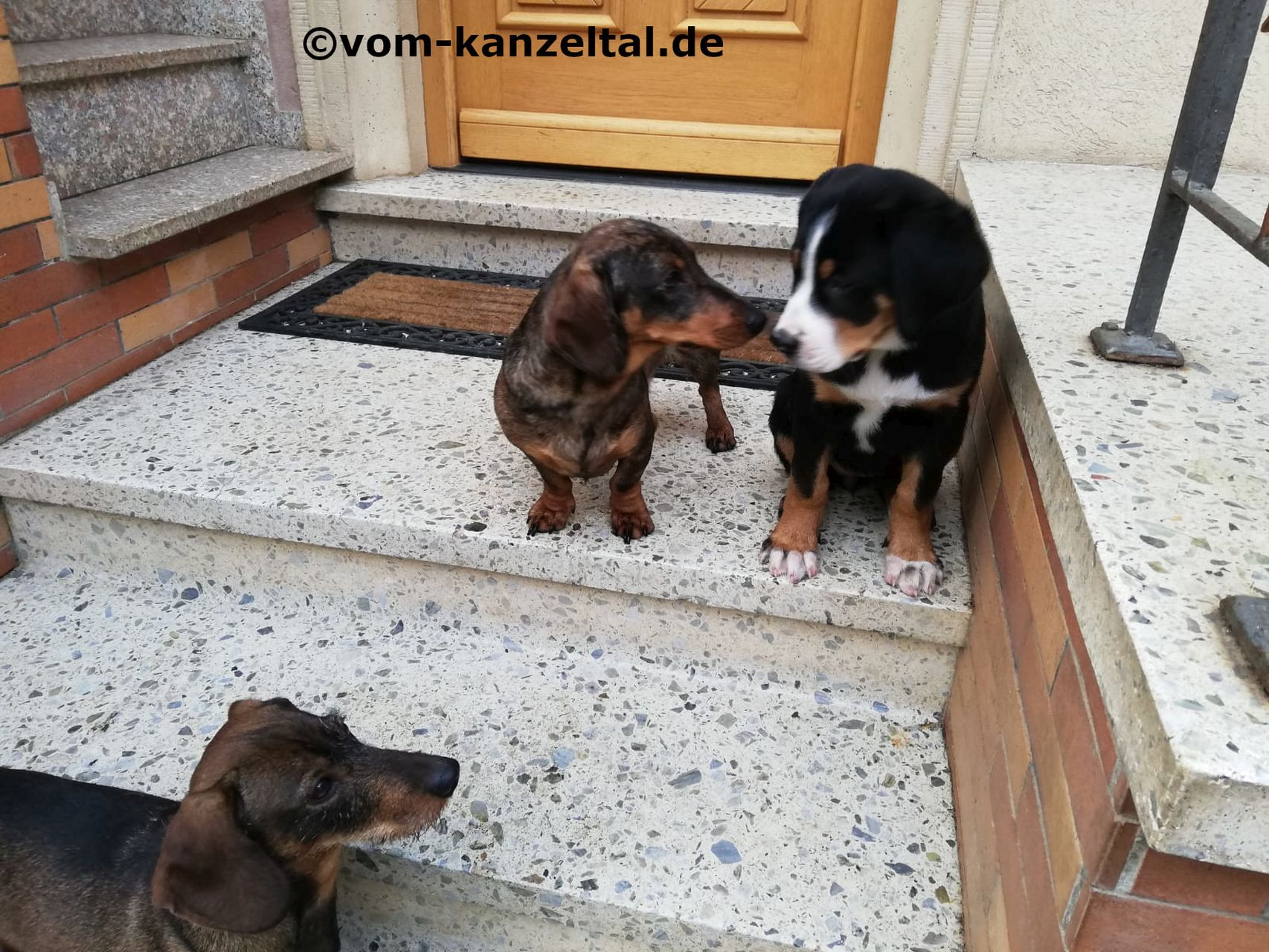 Casey-Lotte und die beiden Kumpel Tom und Basti