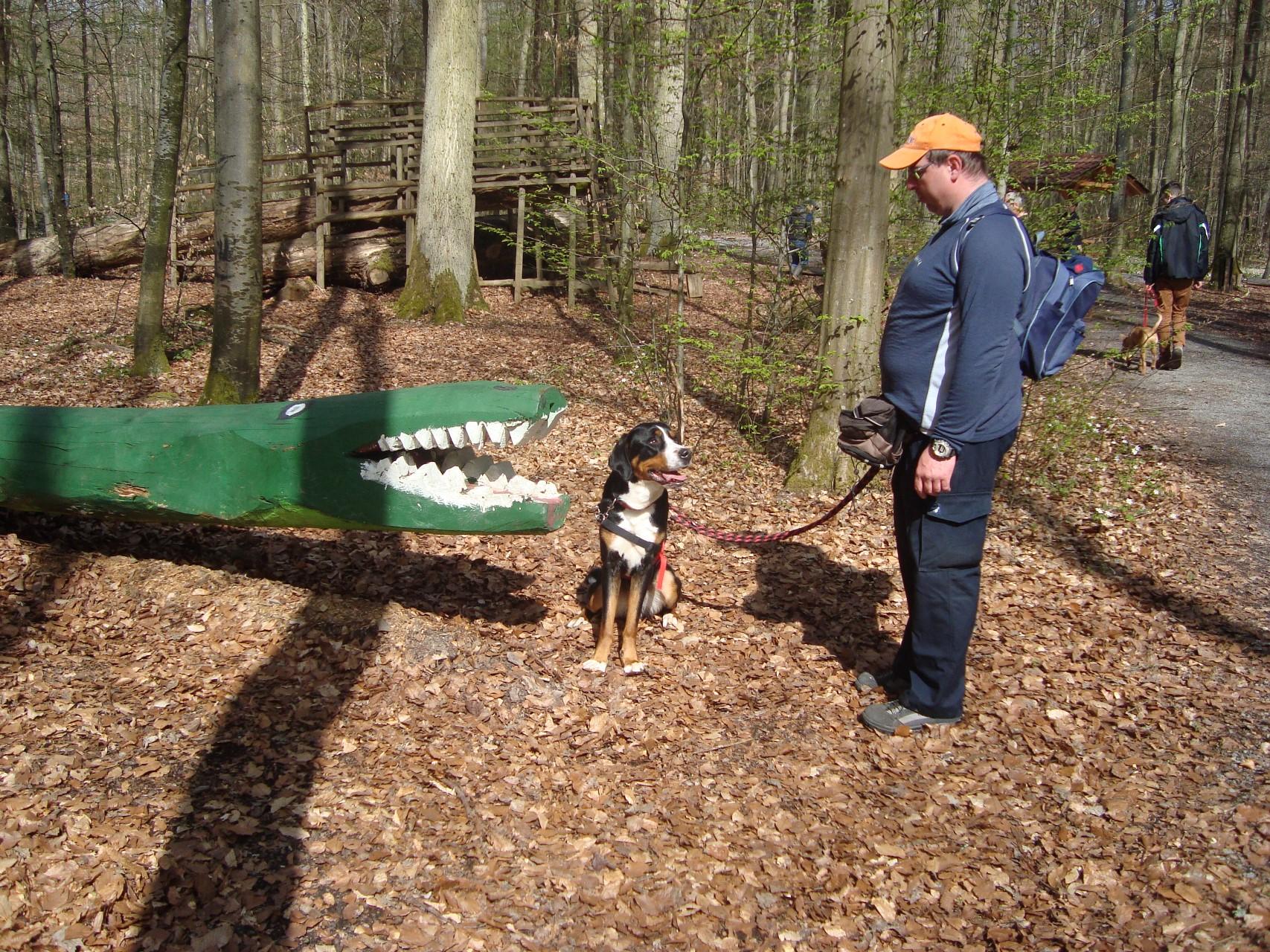 Huch - ein Krokodil mitten im Wald