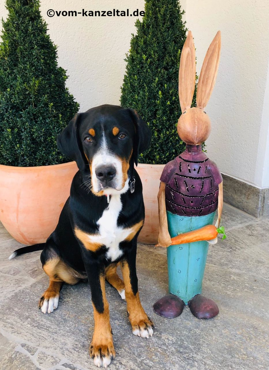 Cleo-Romy und der Osterhase