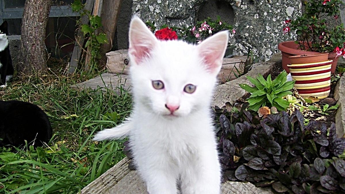 """gatto """"Moritz"""""""