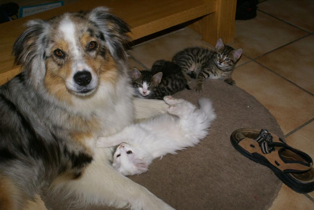 lässt euch nicht täuschen: fremde Katzen werden verjagt