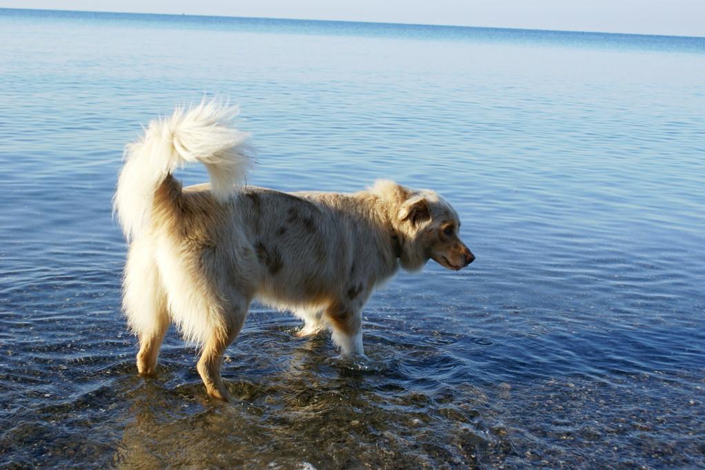 Queeny und Honra erleben das Meer zum ersten Mal...
