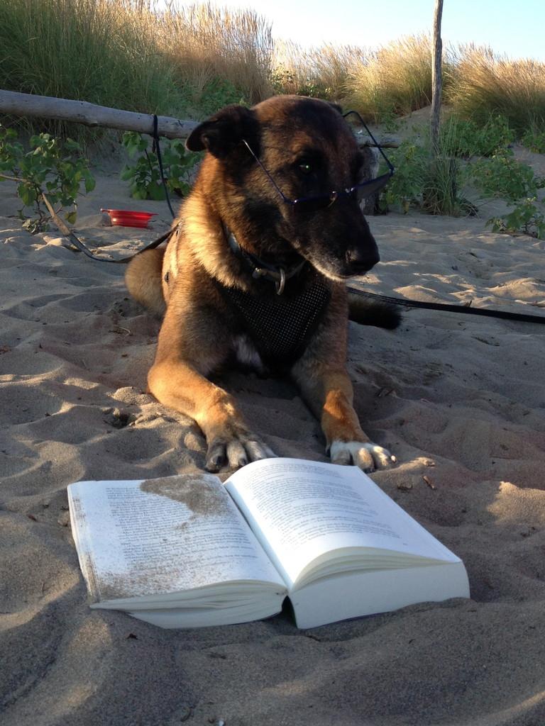 Die Lektüre ist wohl doch nicht so interessant!
