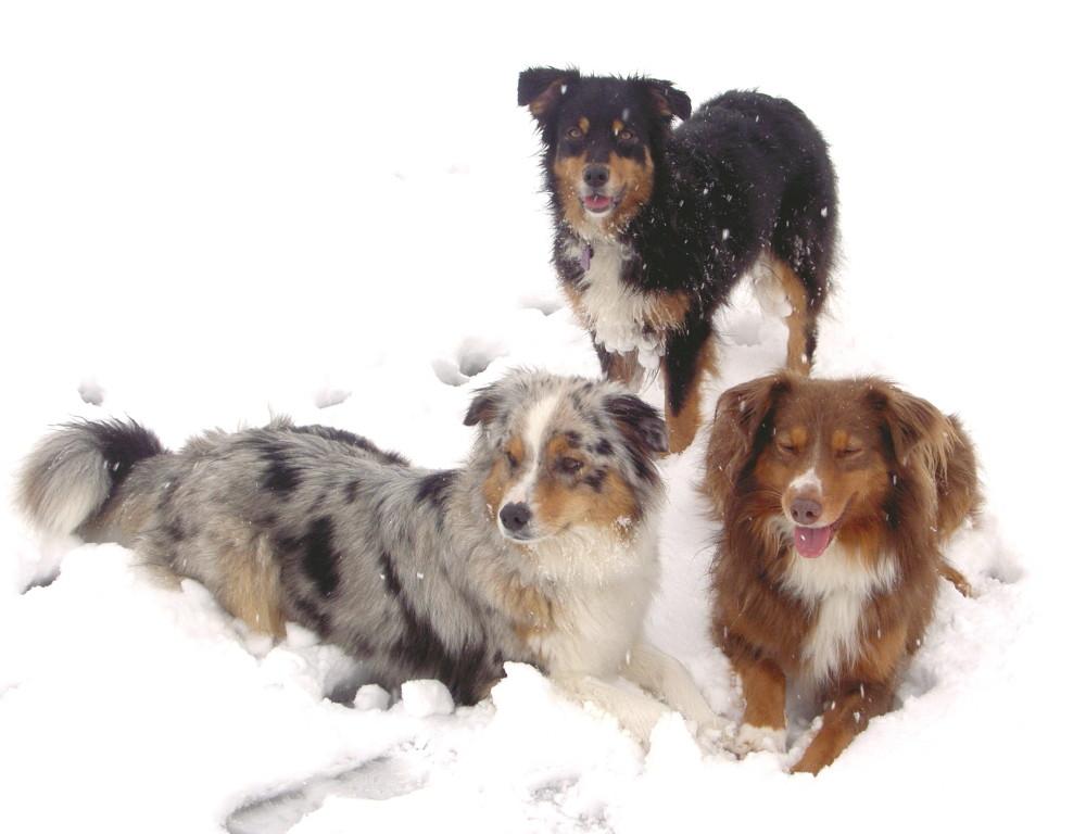Ferienhunde die schon fast zum Rudel gehören