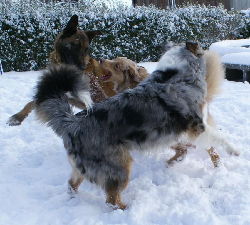 """Unsere drei """"Weiber"""" im verschneiten Garten"""