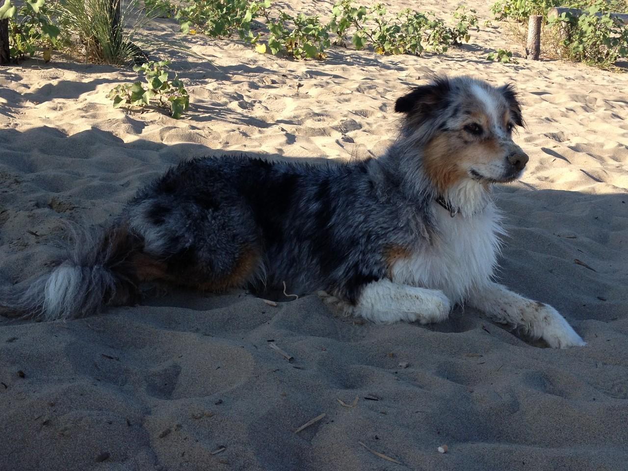 Den anderen Hunden beim Baden zusehen