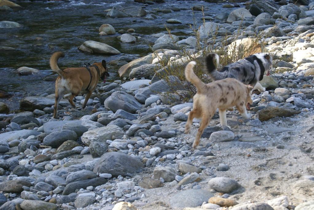 Im Flussbett - Centovalli