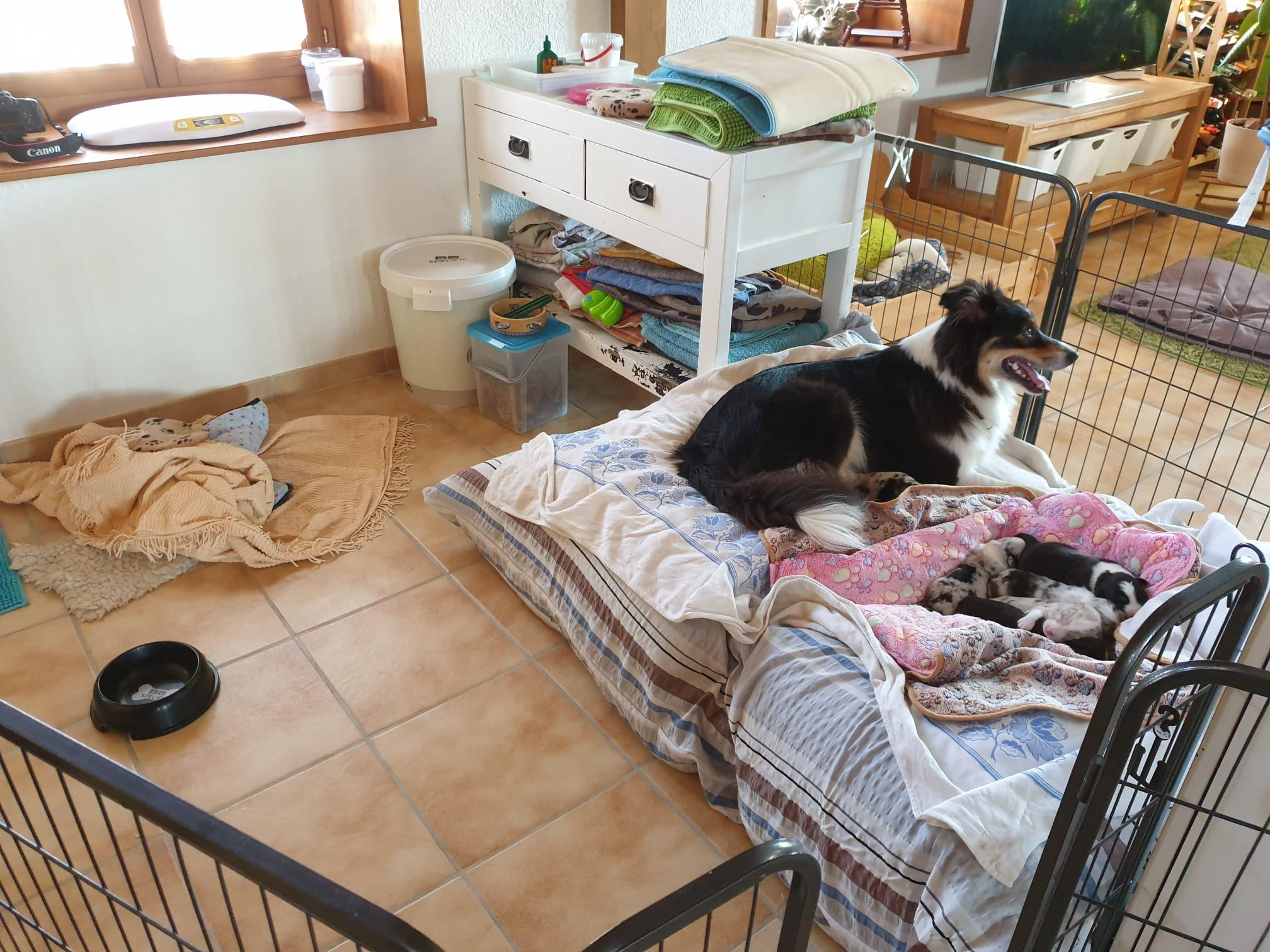 Bettwäschwechsel; da müssen die Kleinen auf Mama's Puff umziehen