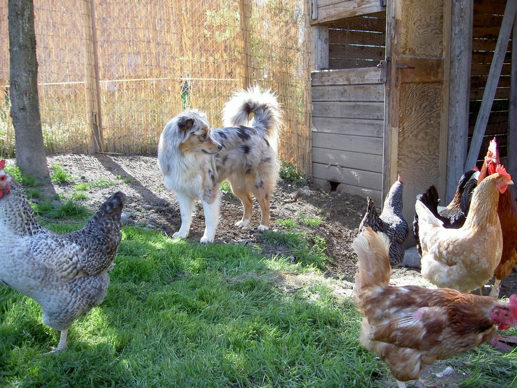 im Hühnerhof
