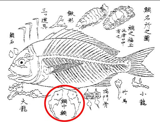 奥倉辰行 著「水族写真(1857年)」より「鯛名所之図」