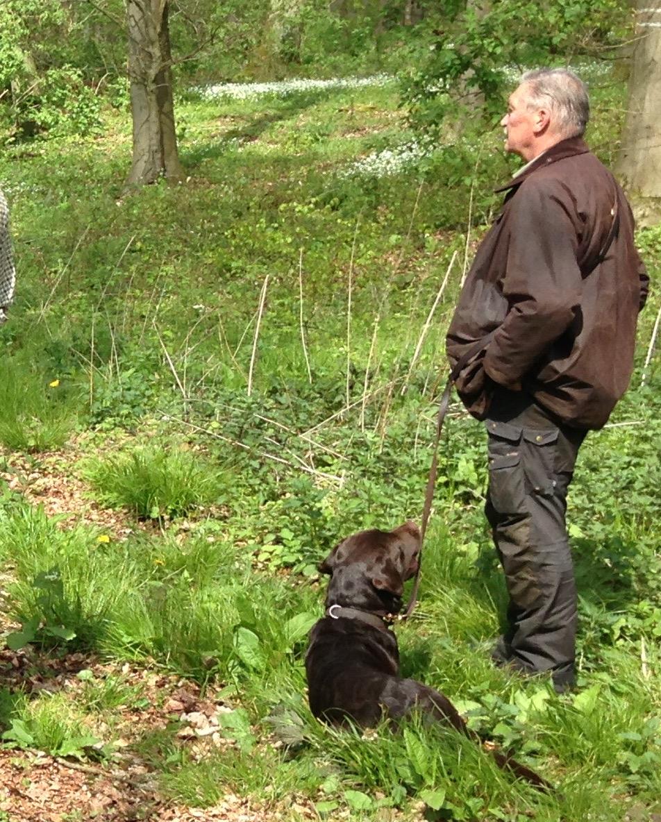 Auch der Labrador-Rüde Tosh von Friedhelm Schlüter machte seine Sache gut.