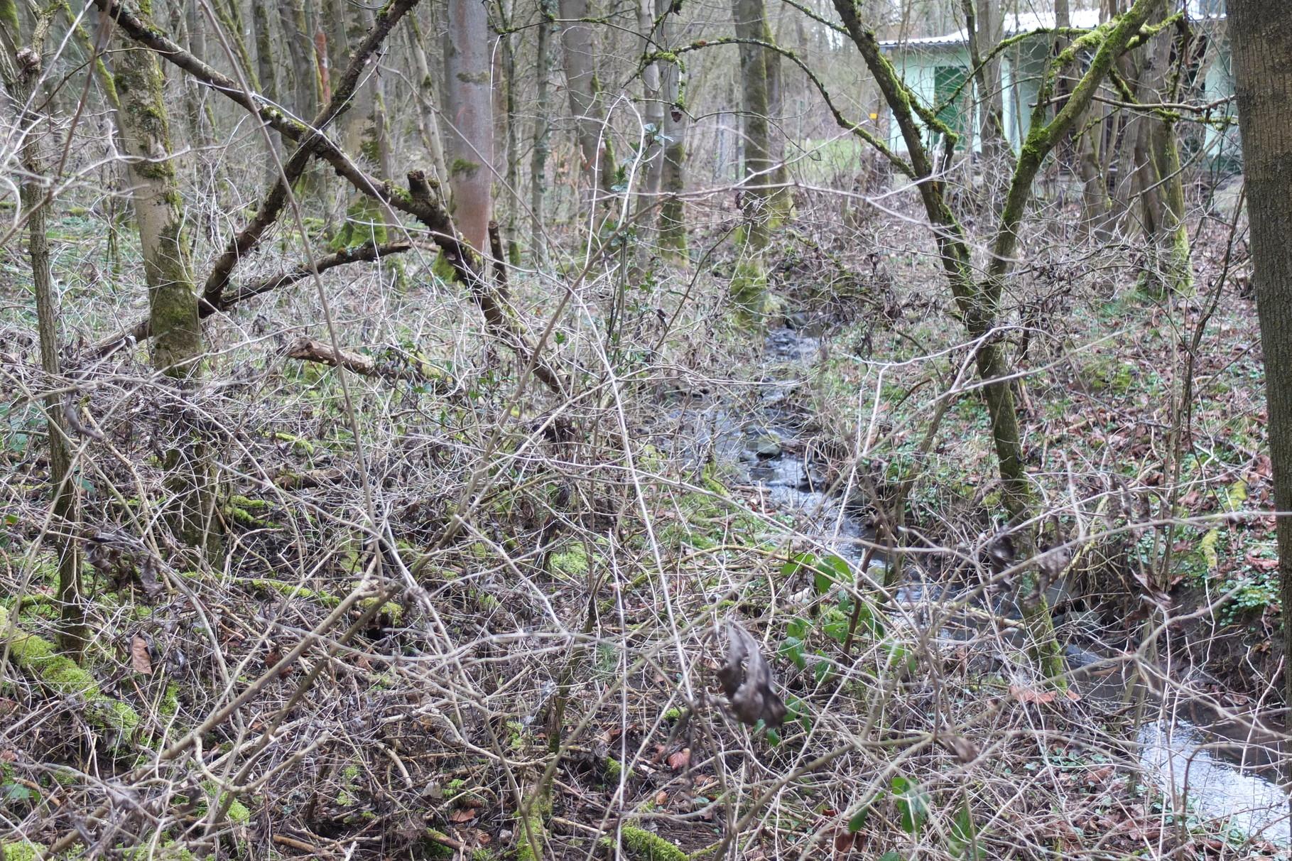 Anlage eines Wasserlehrpfads am Schießstand