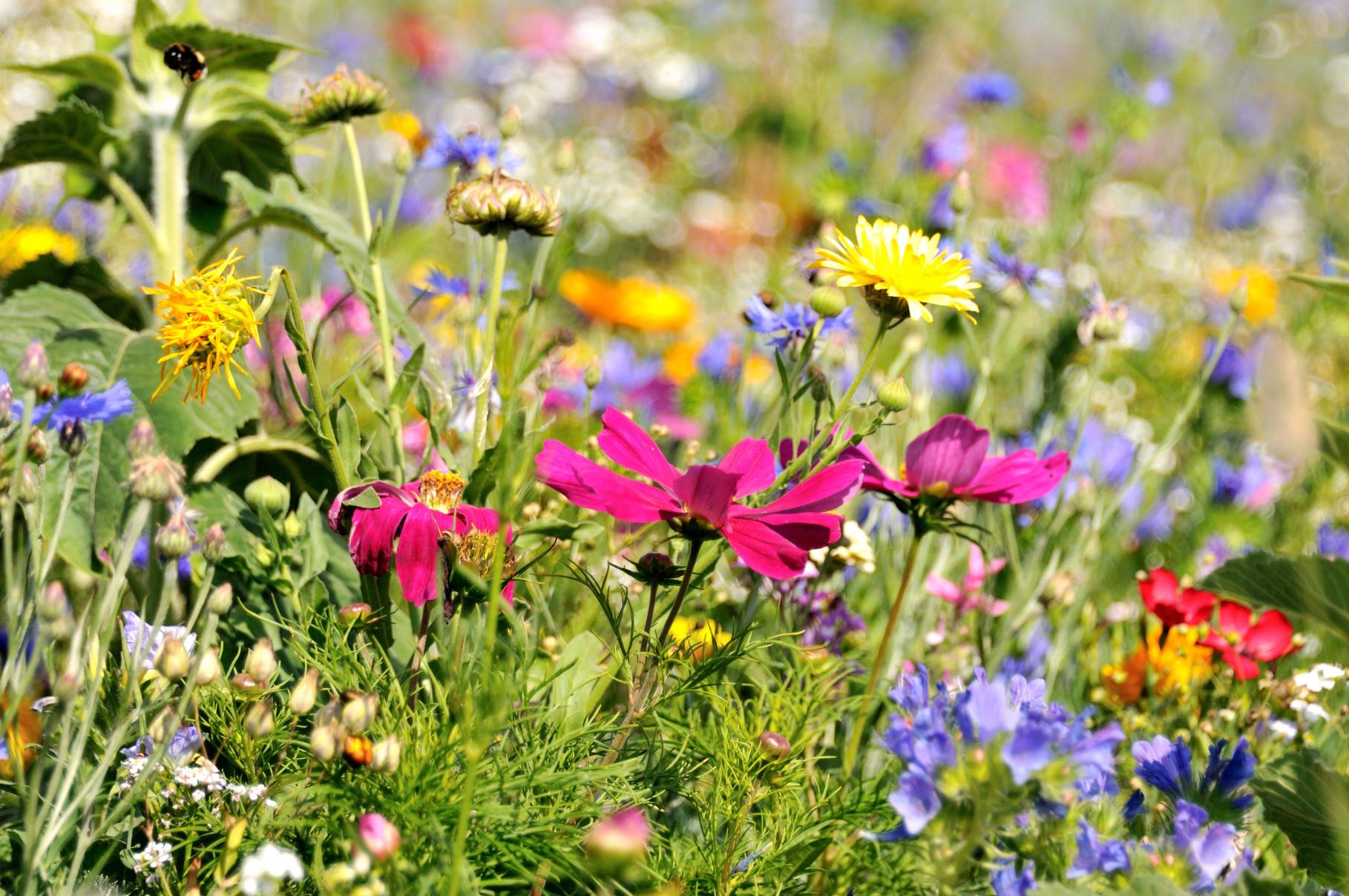 Anlage von Blühflächen in Revieren und Gemeinden