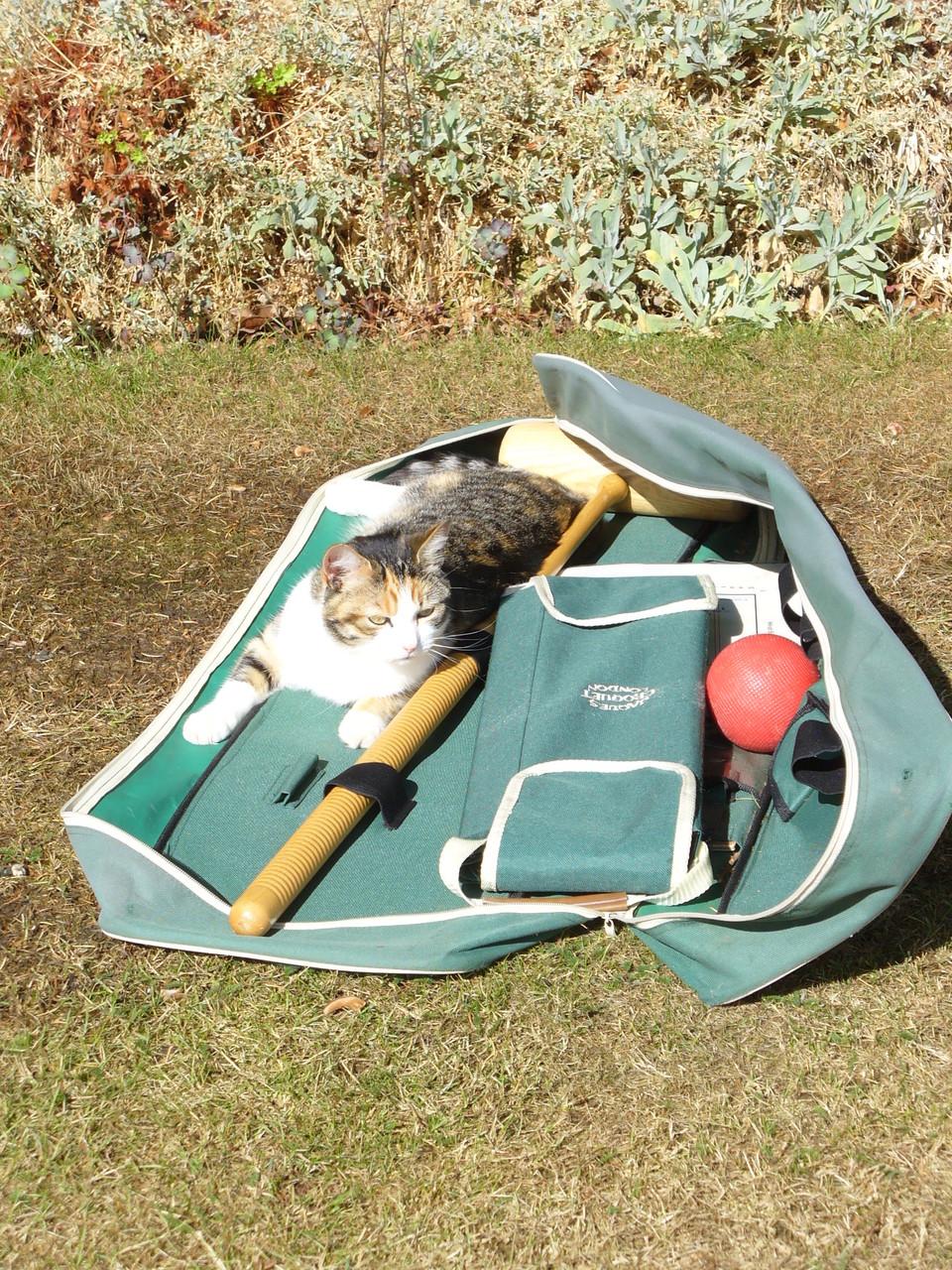 Croquet cat.