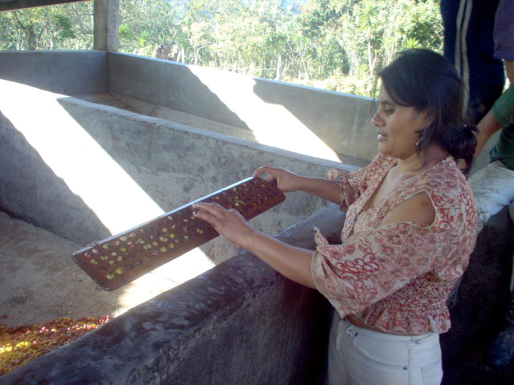 COMUCAP-Socia kontrolliert die Kaffeequalität bei der Annahme
