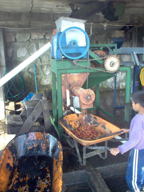 Abtransport der Fruchtschalen an der Schälmaschine