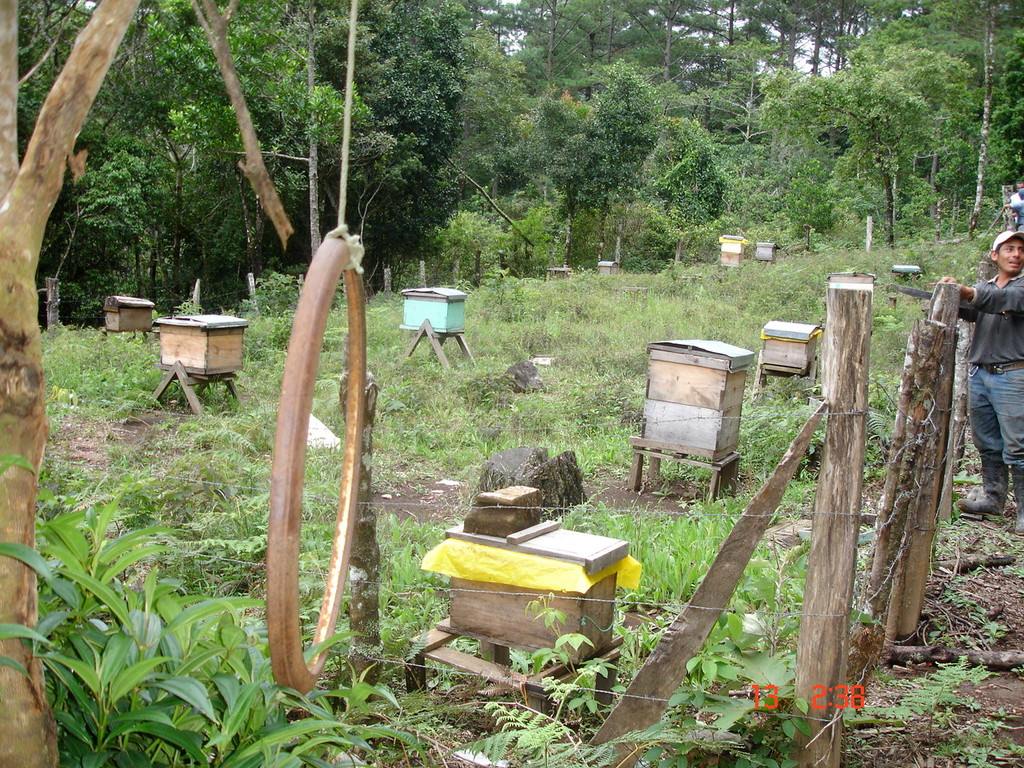 Bienenstöcke eines Kooperativenmitglieds in El Mono, Nahauterique