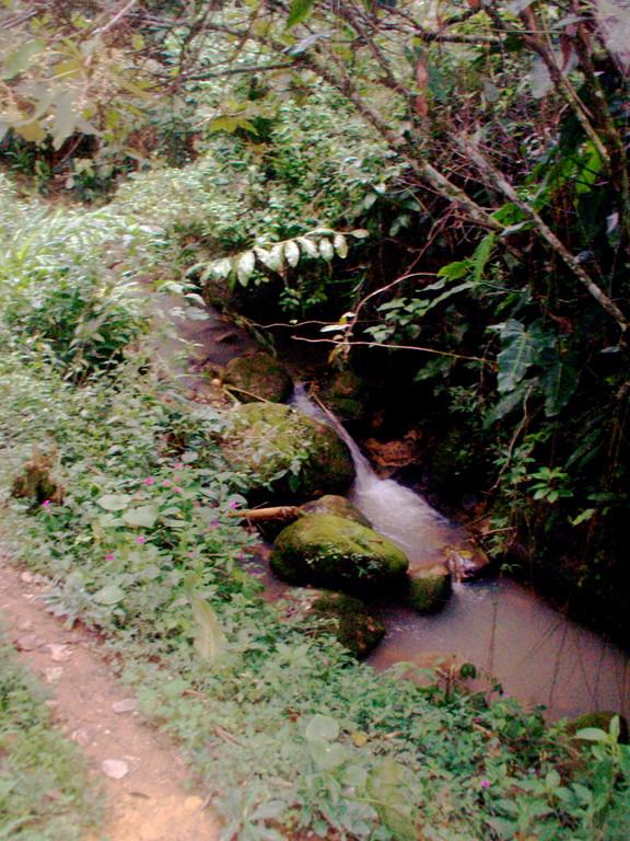 Bachlauf mit Bepflanzung als Erosionsschutz