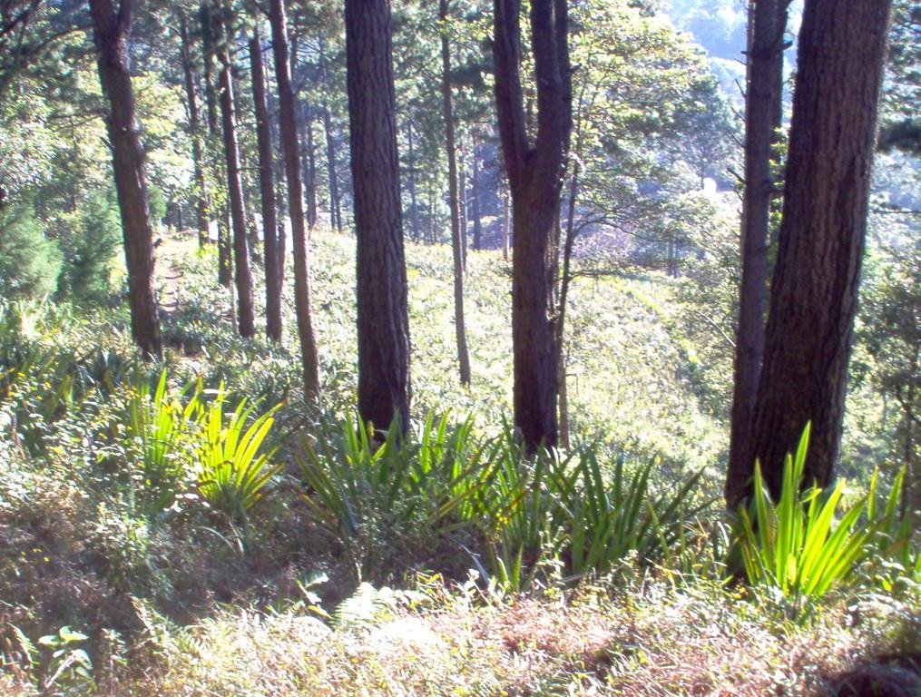 kollektive Aloeverapflanzung beim Berghotel von COMUCAP