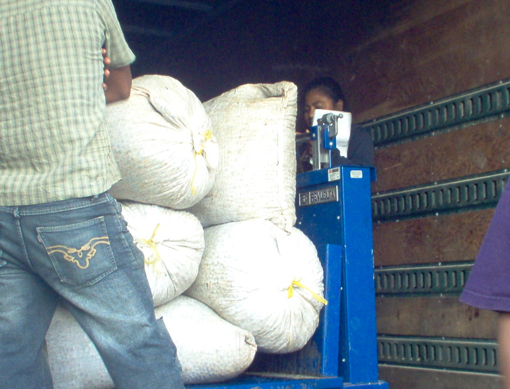 Gewichtskontrolle bei der Kirschkaffeeannahme am COMUCAP-Büro