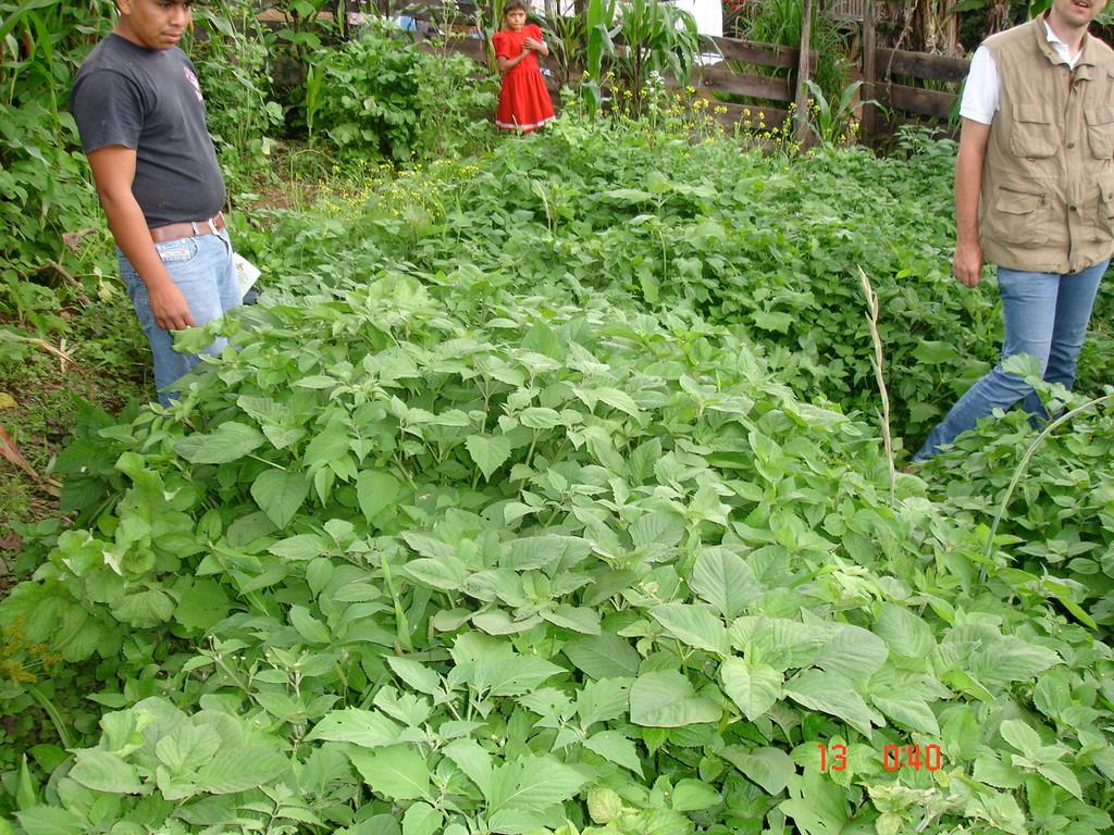 Gemüsepflanzung eines Kooperativenmitglieds