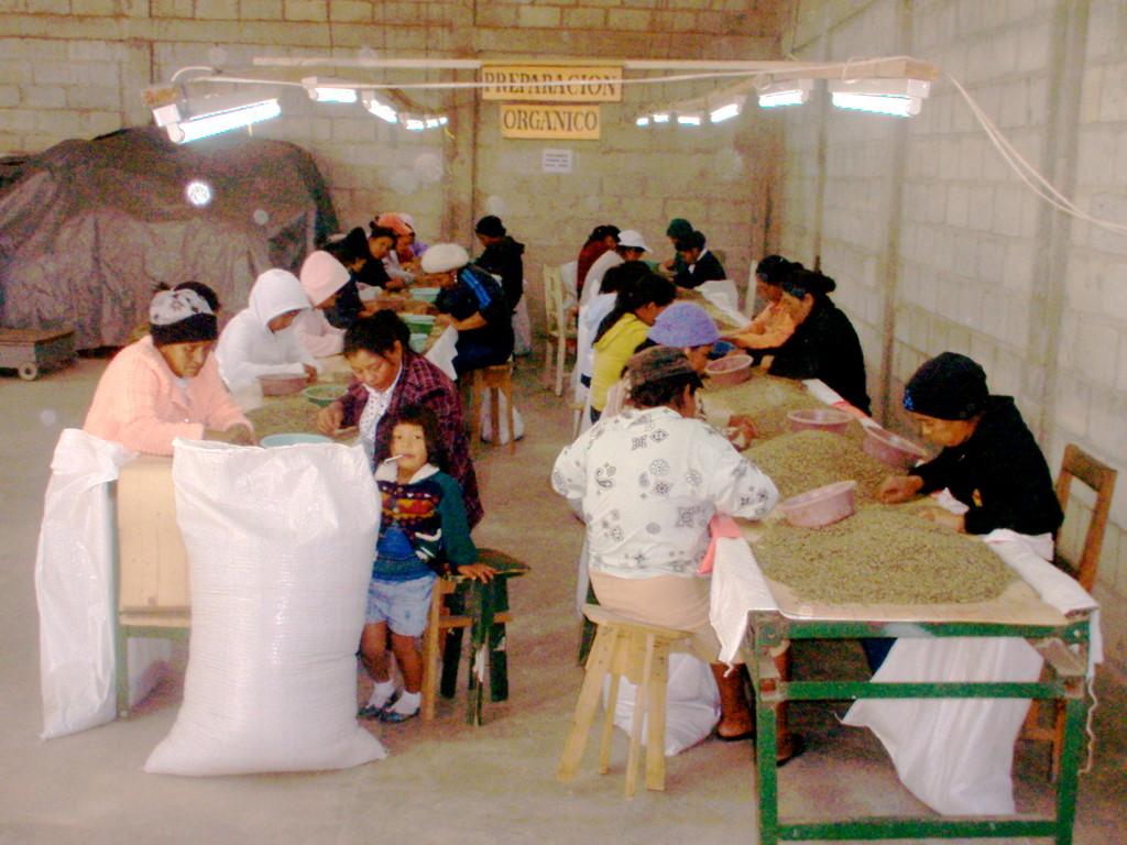 manuelle Selektion von Kaffee durch eine COMUCAP-Frauenarbeitsbrigade