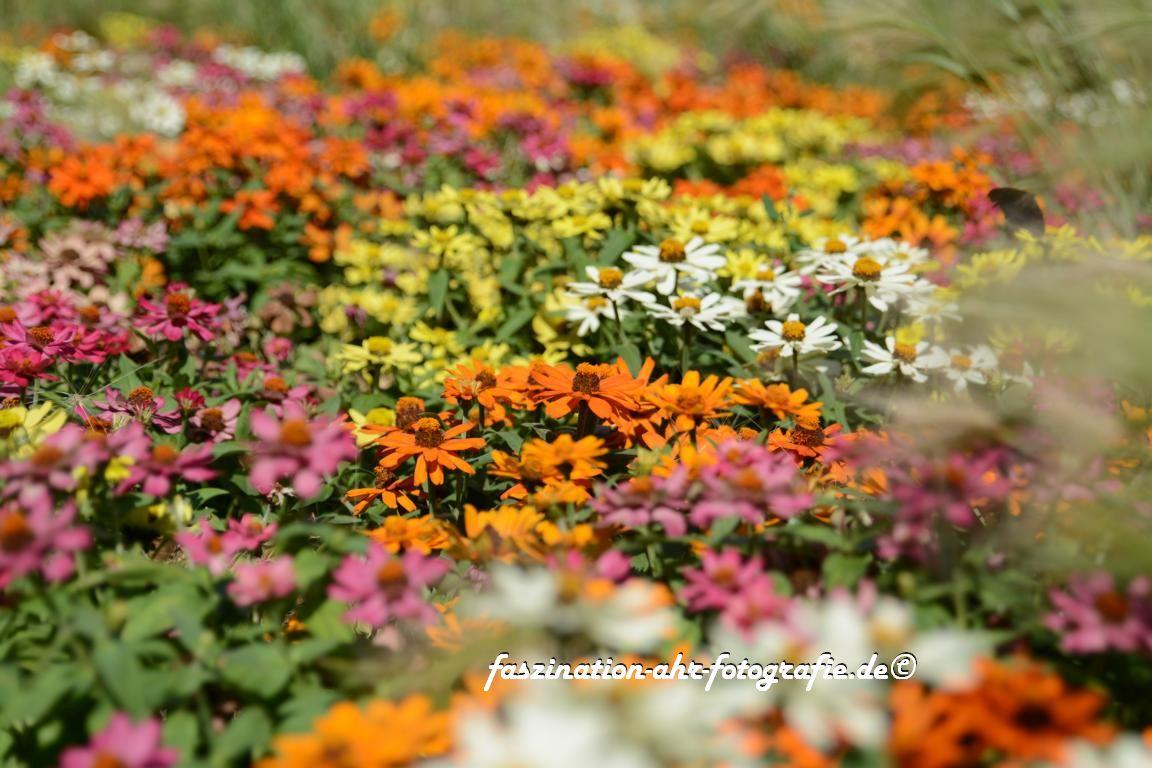 Blumenvielfalt in der ganzen Stadt