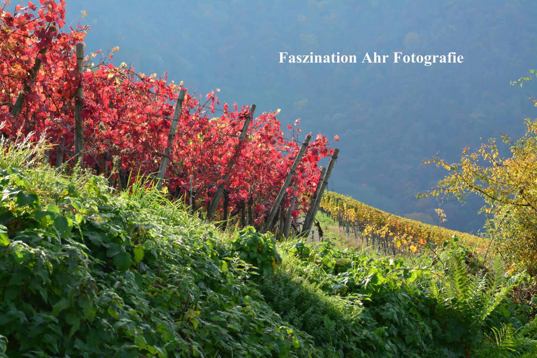 Herbstbilder14