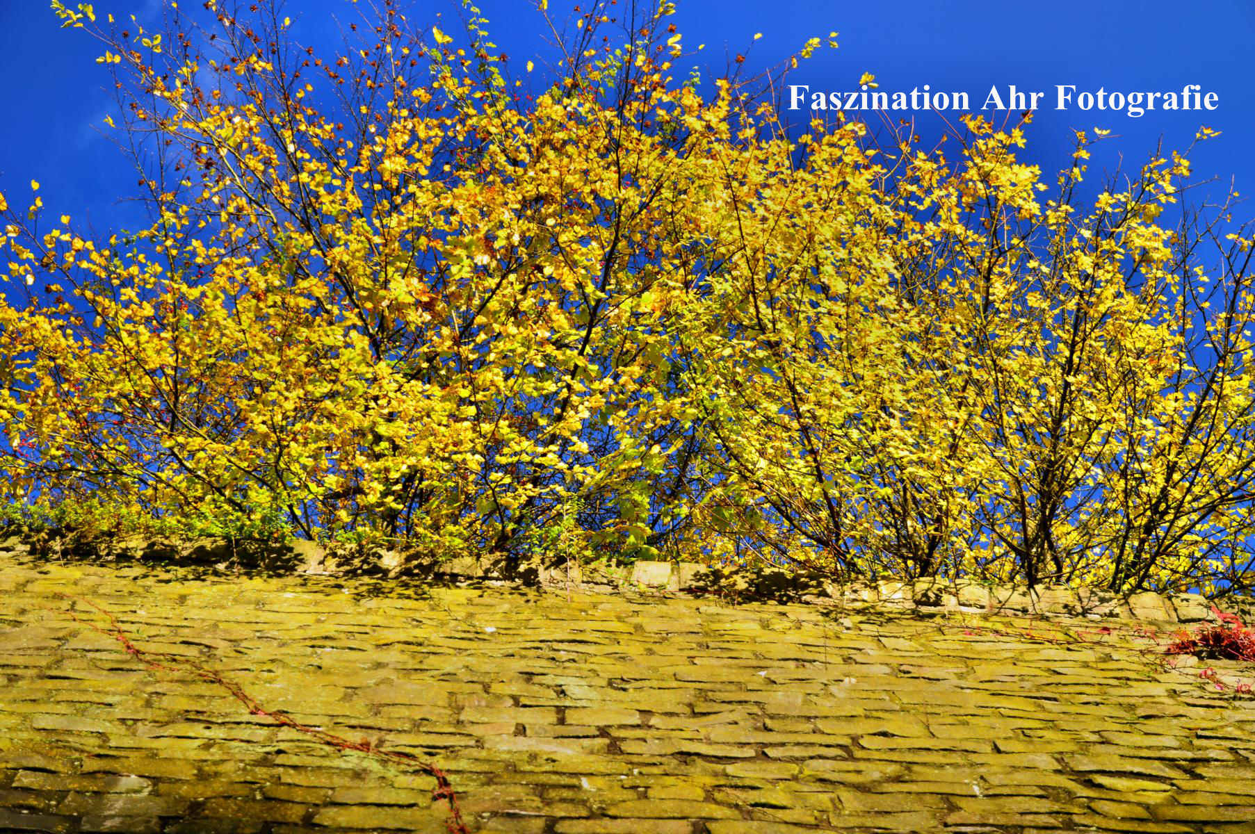 Herbstlaub1