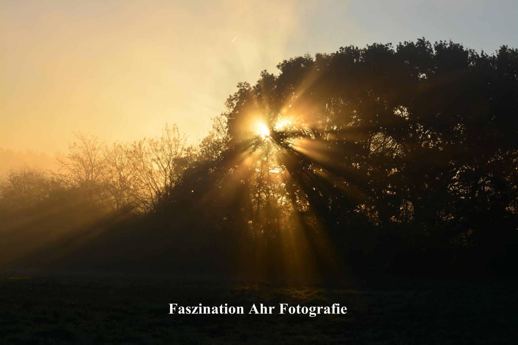 Morgendliche Herbstbilder7