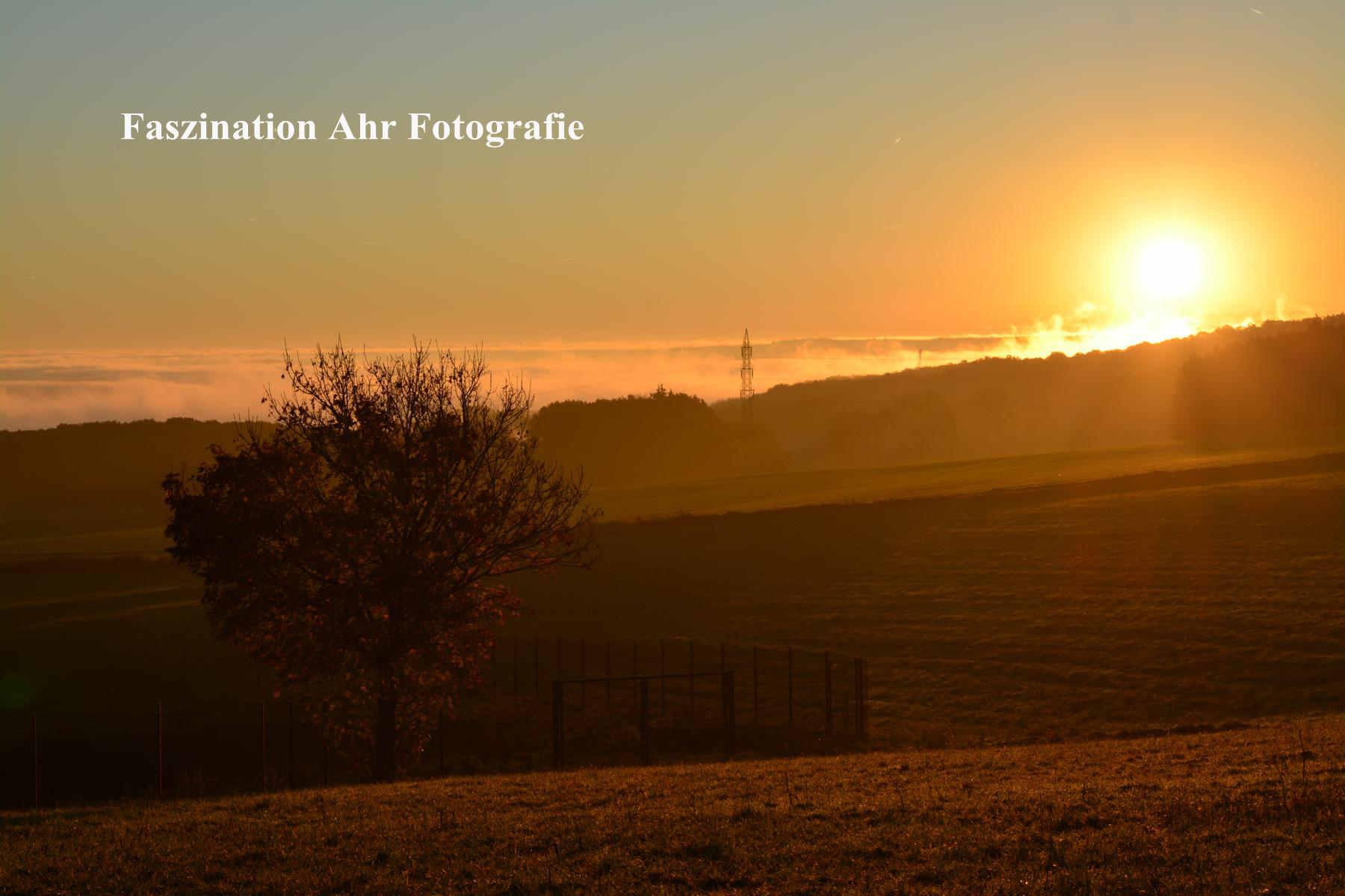 Morgendliche Herbstbilder4