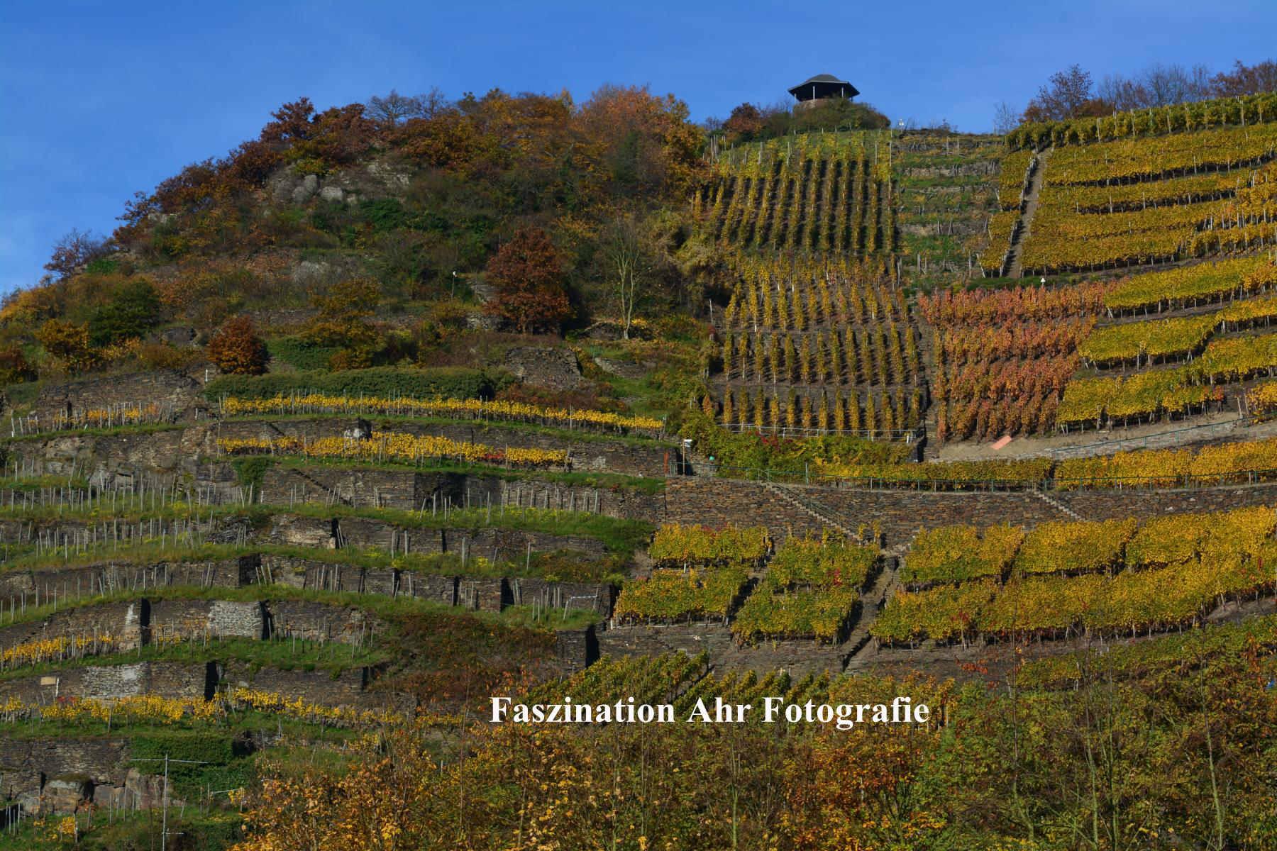 Herbstbilder3