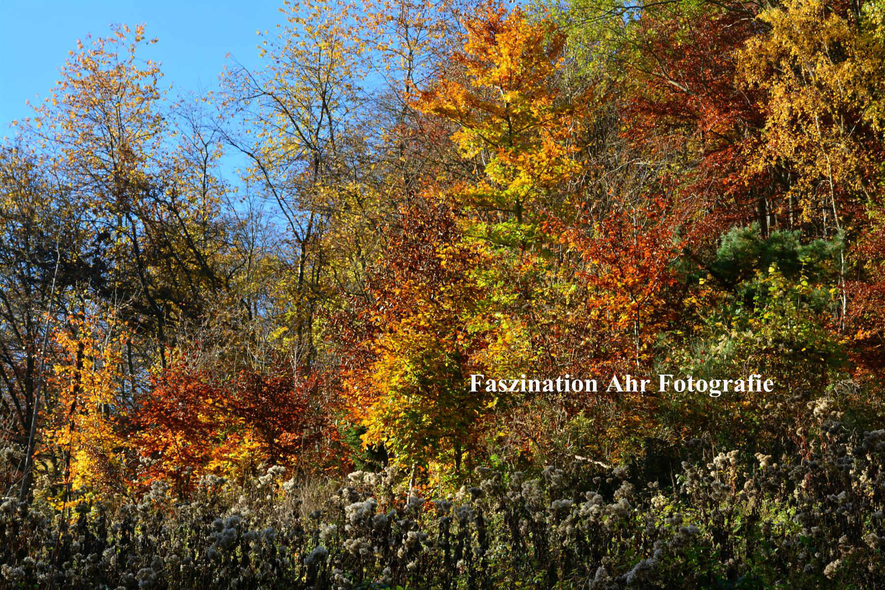 Herbstbilder4