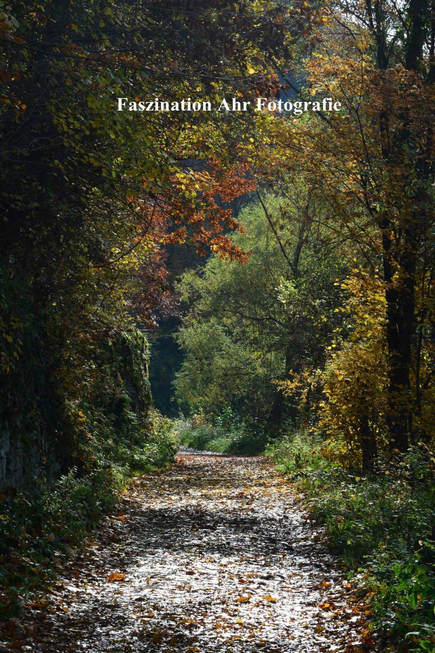Herbstbilder7