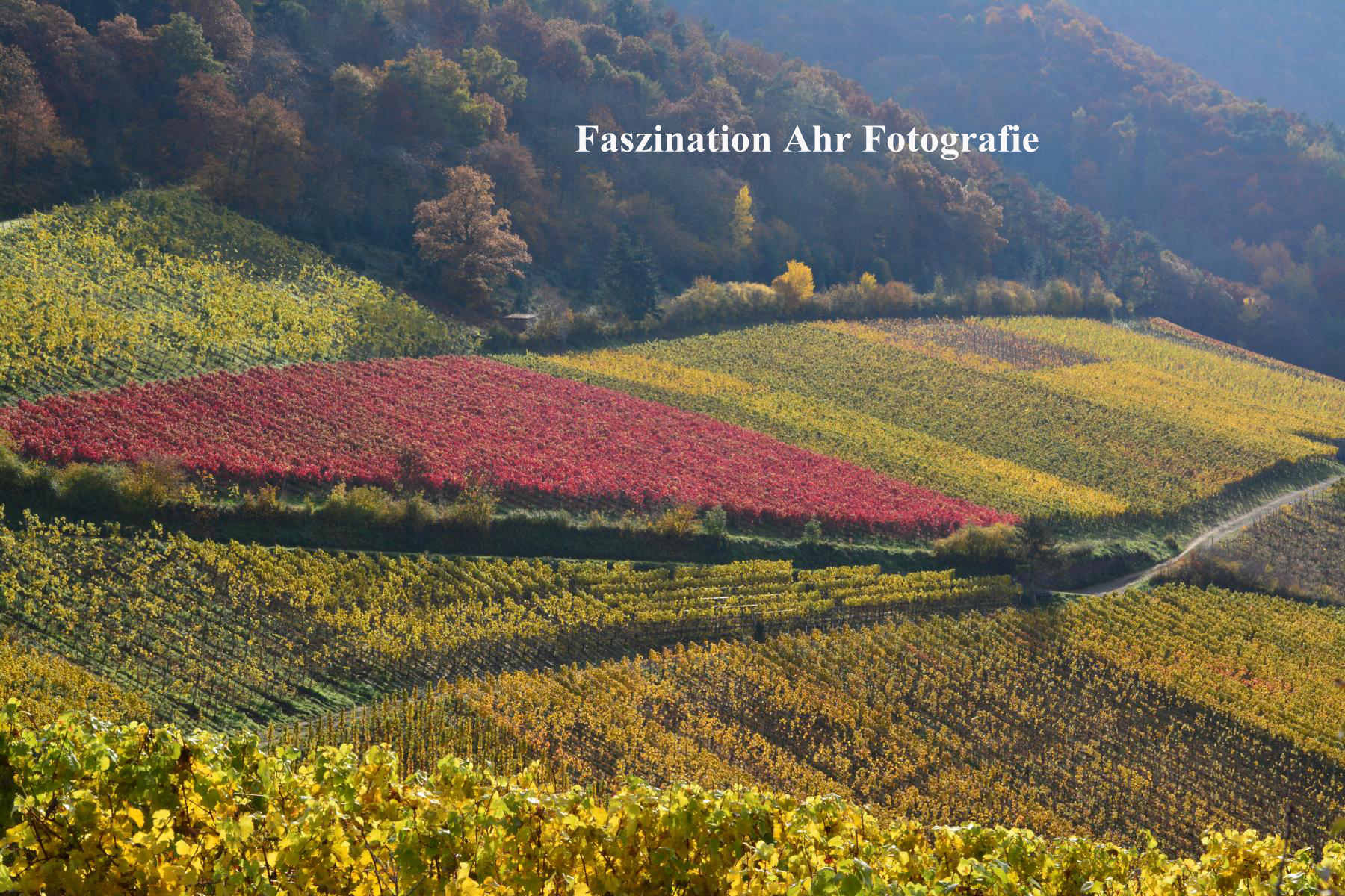 Herbstbilder13