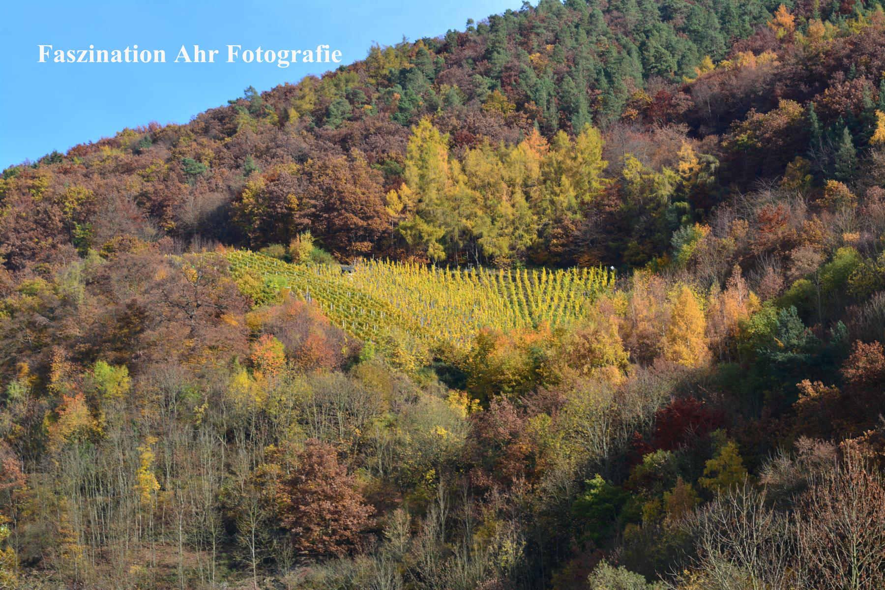 Herbstlaub8