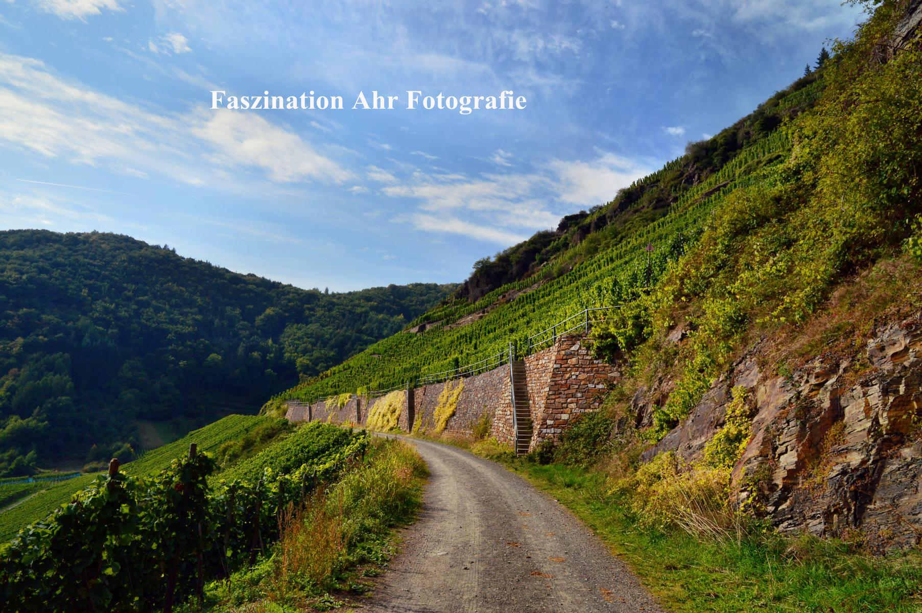 Rotweinwanderweg 1