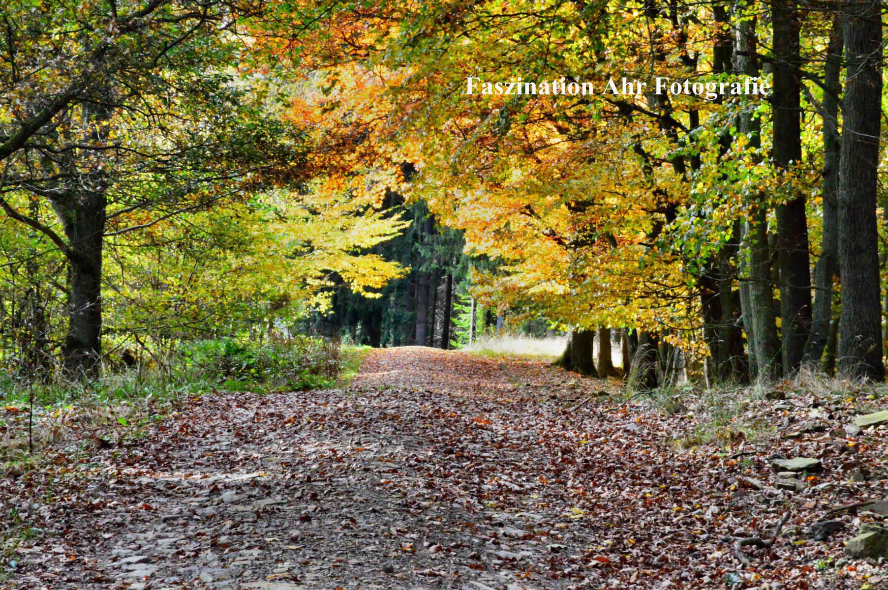 Herbstbilder18