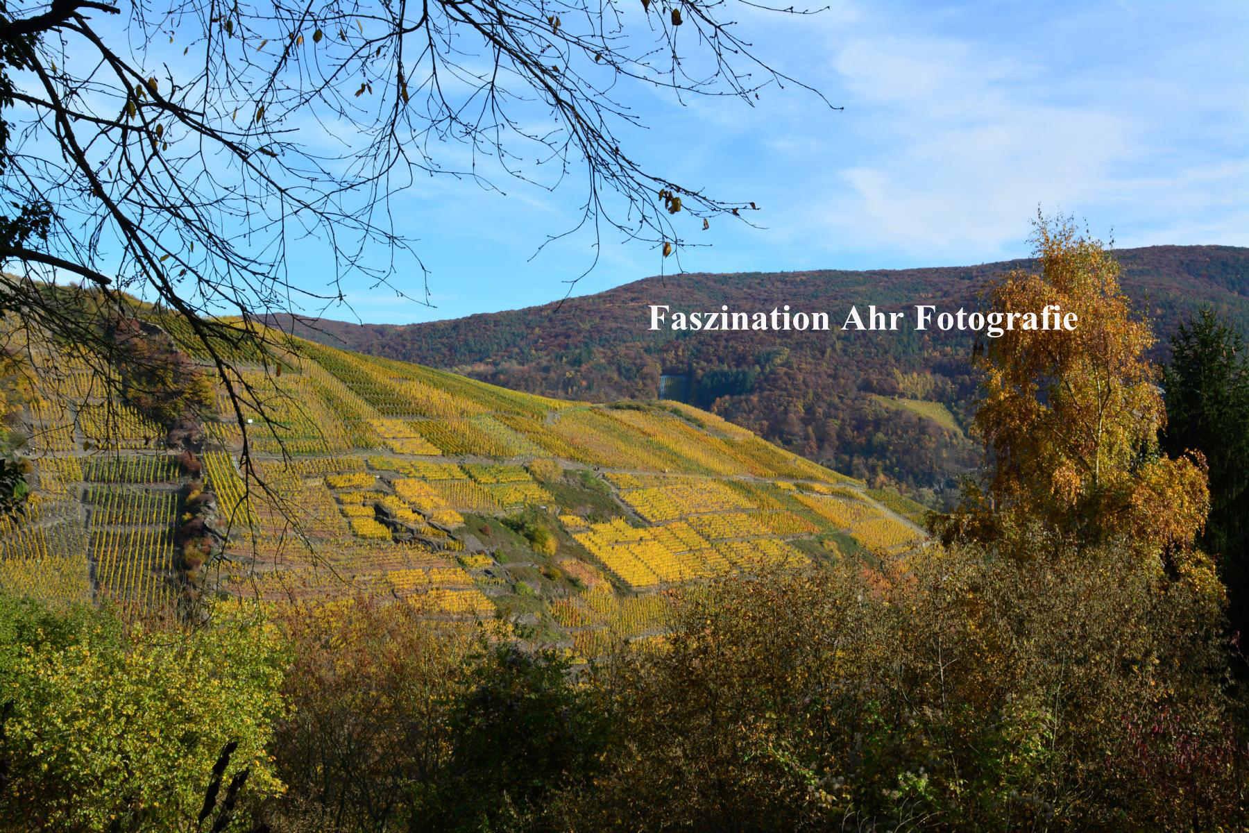 Herbstbilder8