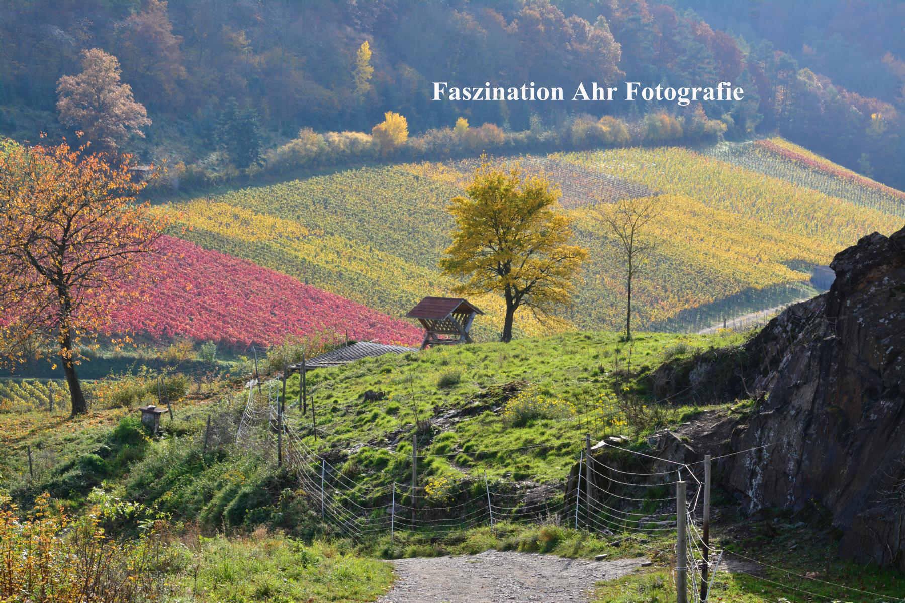 Herbstbilder11