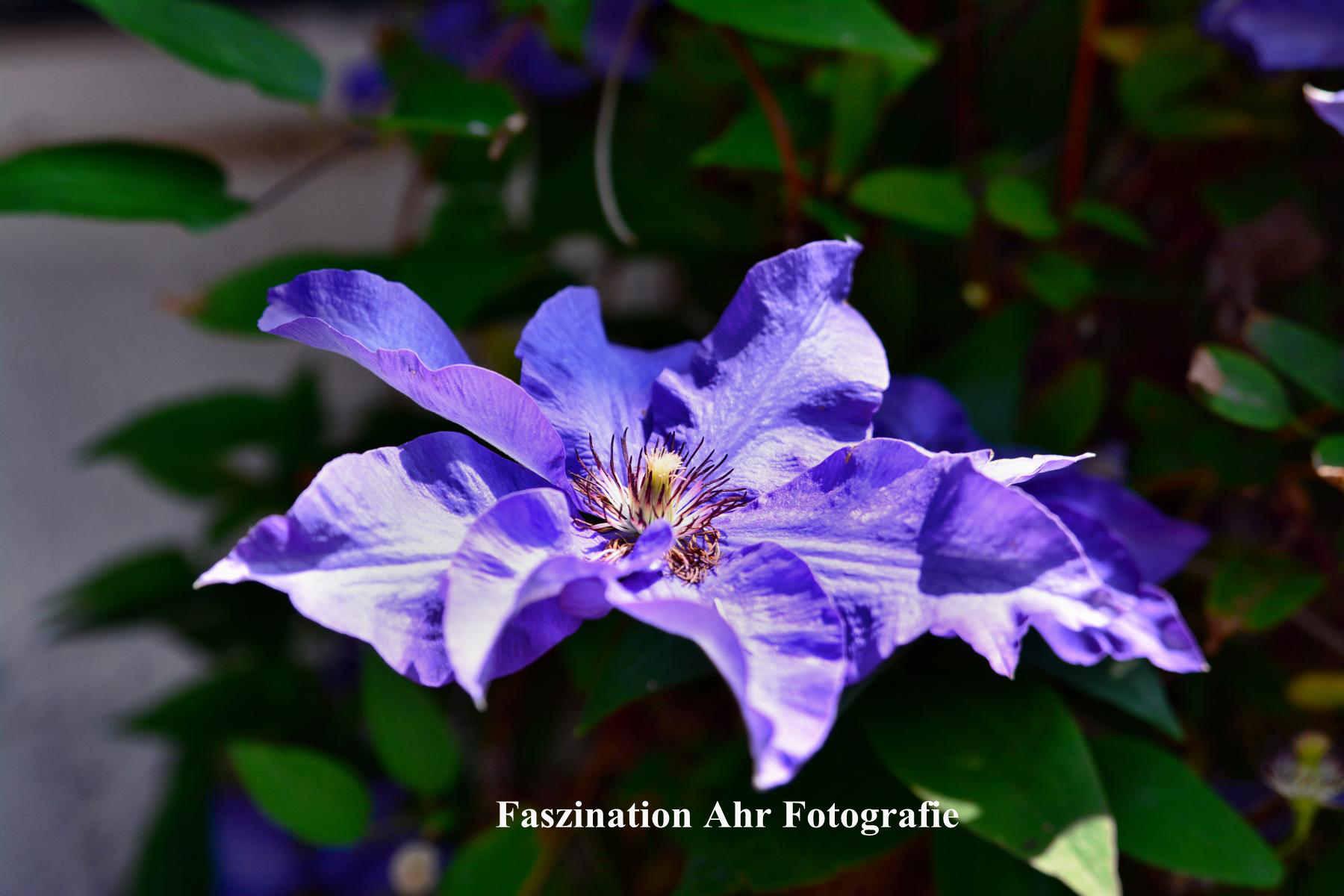 Blumengarten 2