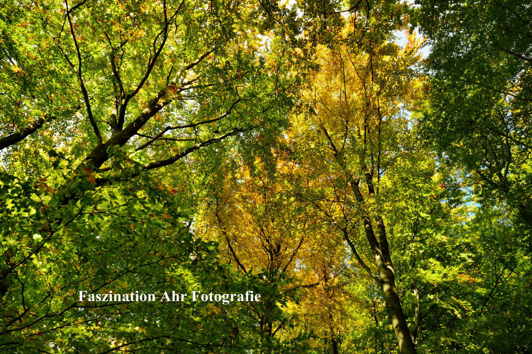 Herbstlaub5