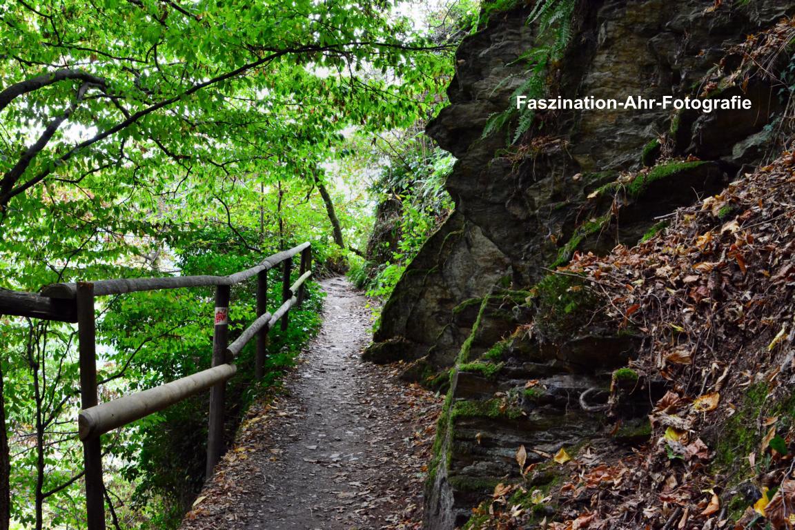 Rotweinwanderweg in der Nähe der Moses-Quelle in Dernau