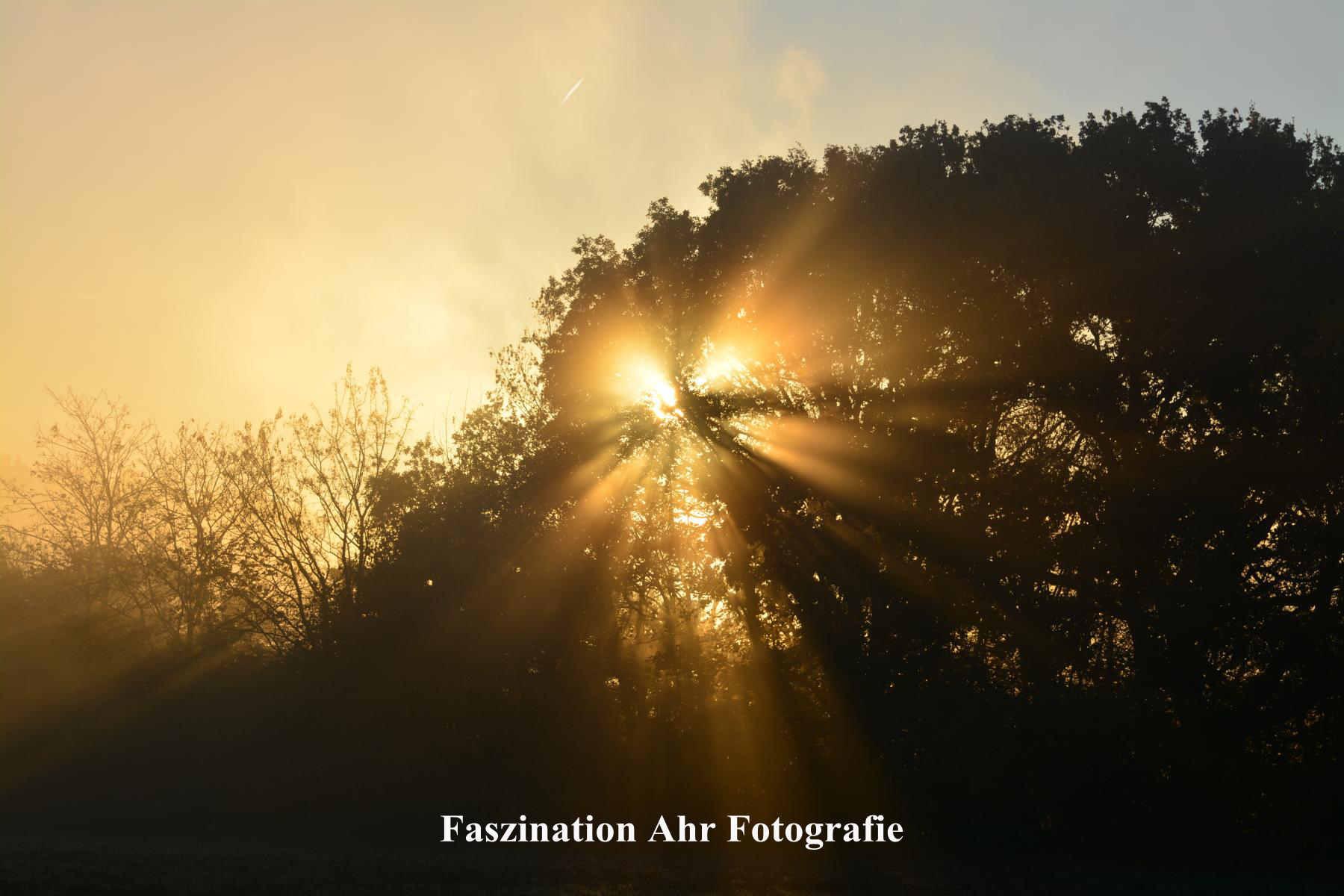 Morgendliche Herbstbilder6