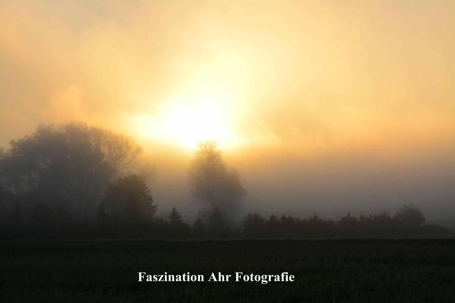 Morgendliche Herbstbilder5