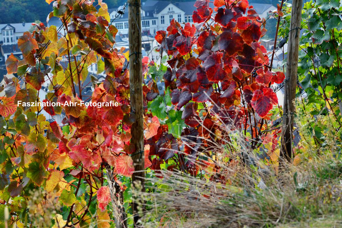 Im Hintergrund die Vinothek und das Cullinarium der Dagernova Weinmanufaktur. Immer ein Besuch wert.