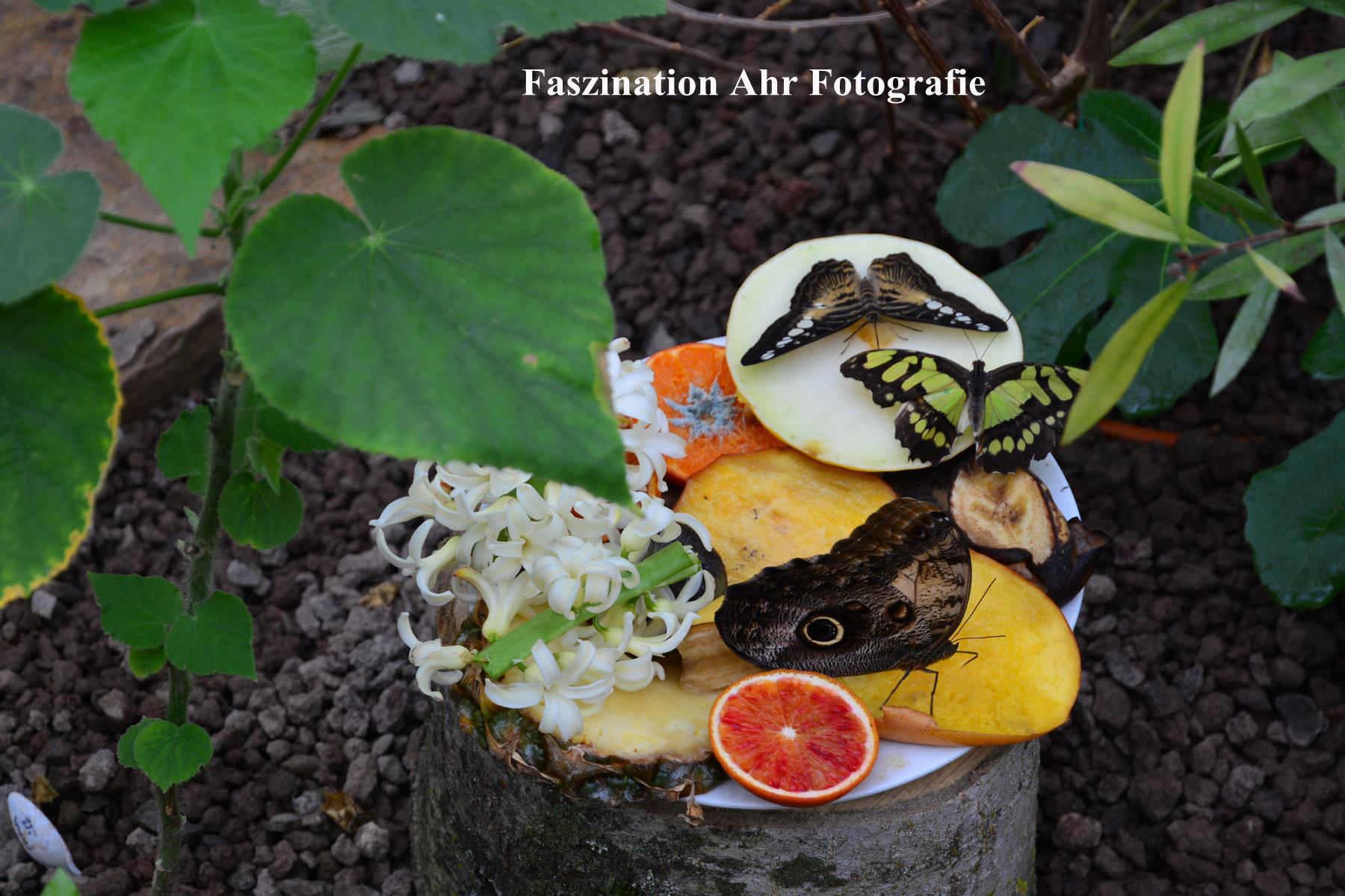 Nahrung für die Schmetterlinge