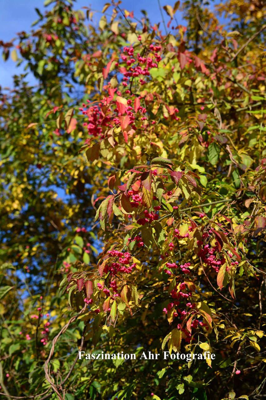 Herbstlaub2