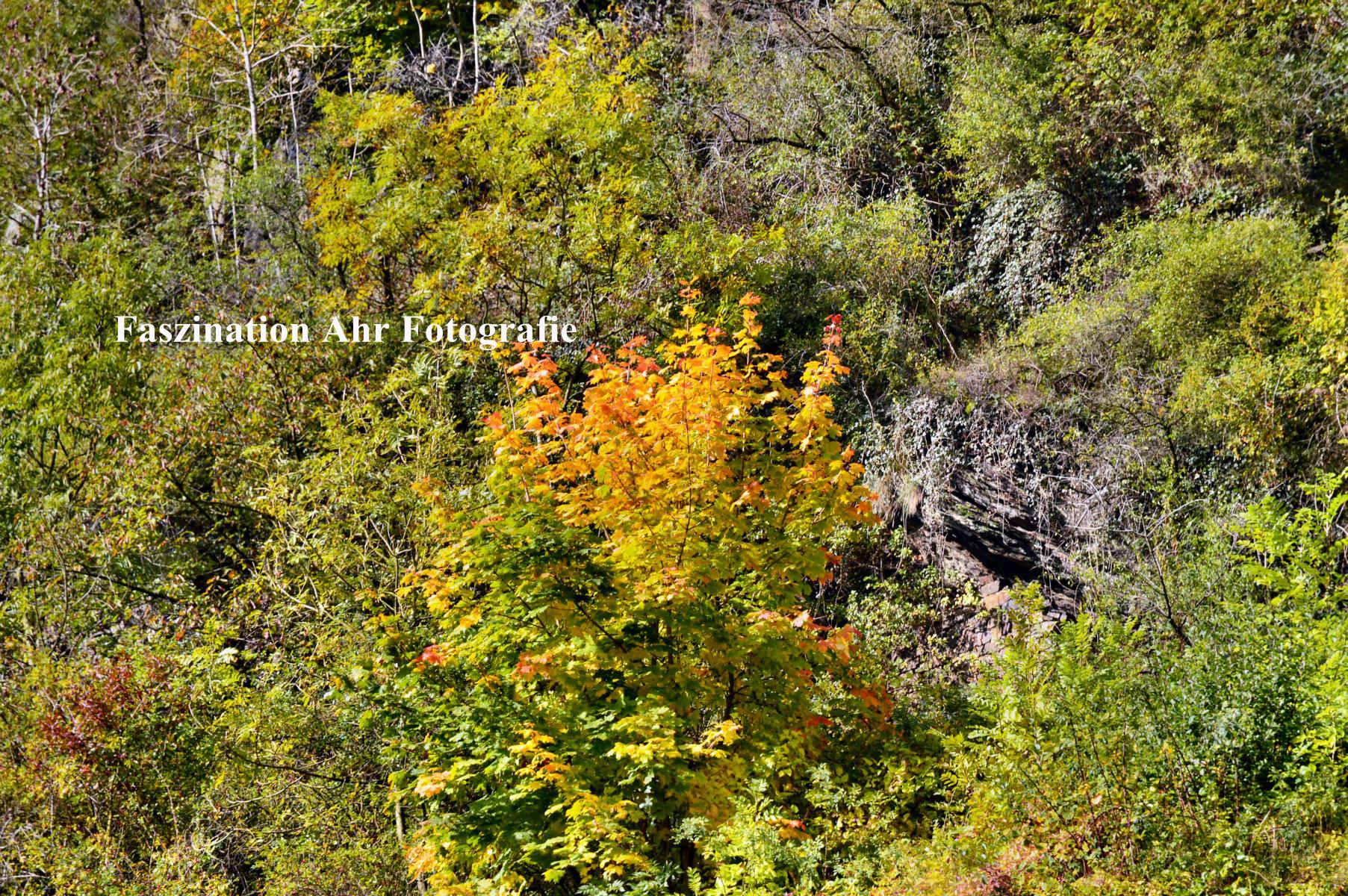 Herbstbilder 1