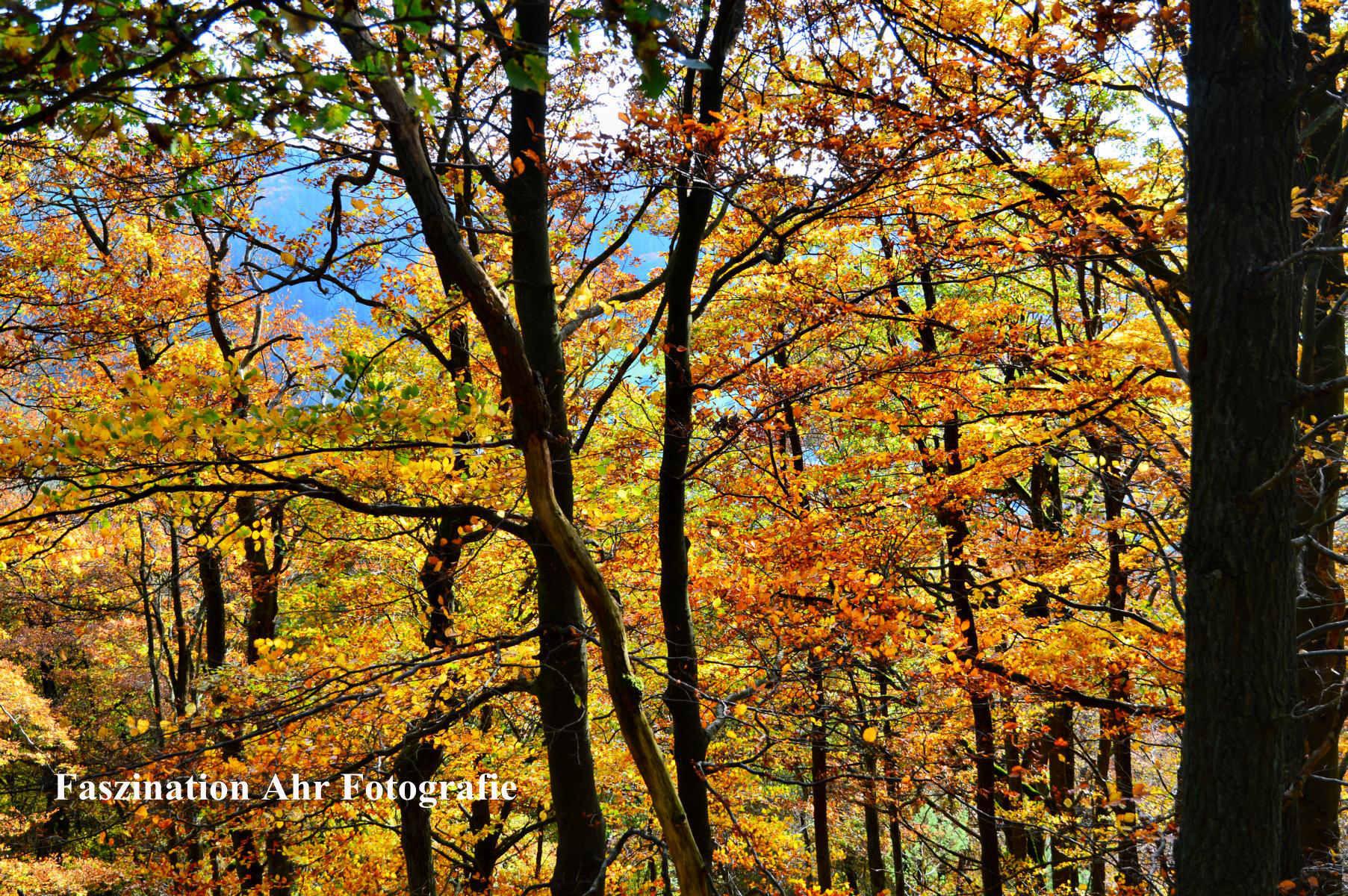 Herbstbilder17